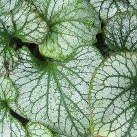 Plants for Deep Shade: Useful Shade Loving Plants