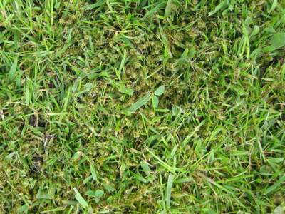 Lawn Moss Problems Causes Control And Prevention