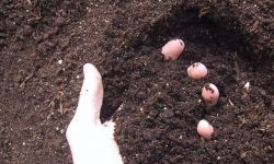 Types of Soil, Loam