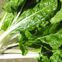 Easy to Grow Swiss Chard