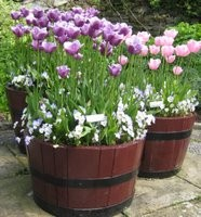 Wooden Barrel with Spring Bulbs