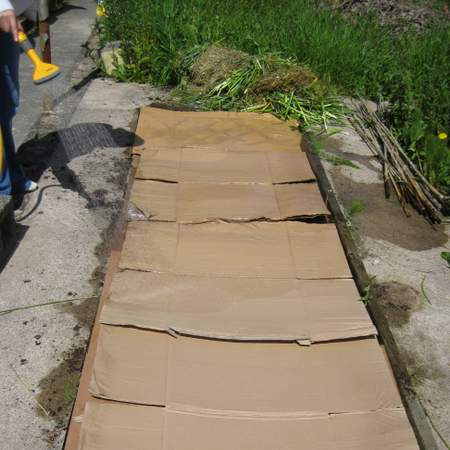 Using cardboard to suppress weeds in a No Dig Garden