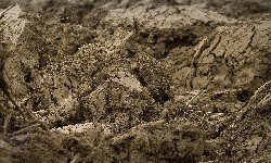 Types of Soil, Clay Soil