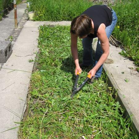 Preparing a no dig garden bed - cutting down weeds