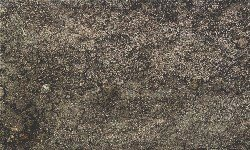 Types of Soil, Silt Soil