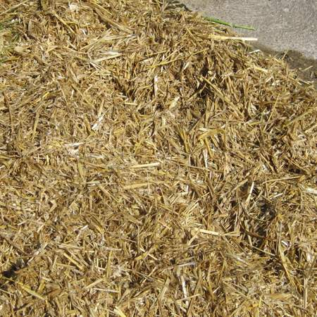Using a straw mulch in no till gardening